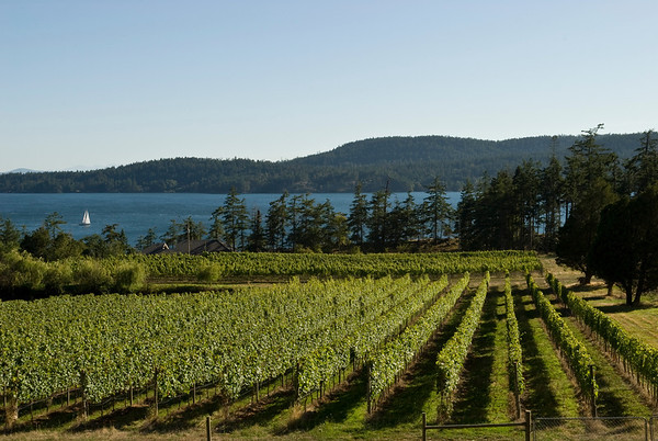 Gallery - BC Wine Country
