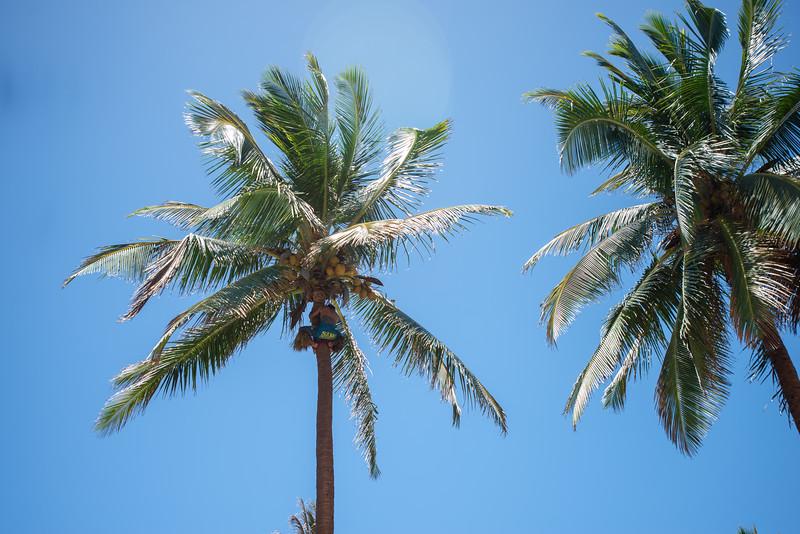 Hawaii2019-668.jpg