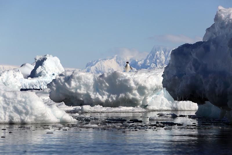 Antarctica_36.JPG