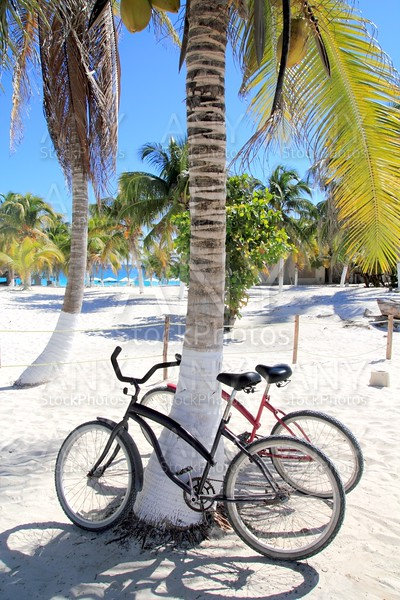 bicycles bike on coconut palm tree caribbean beach