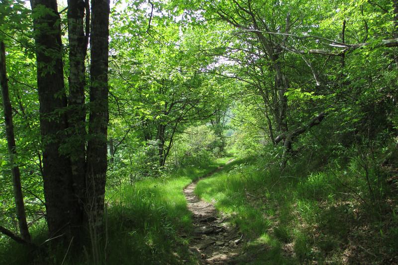 Graveyard Ridge Trail (5,350')