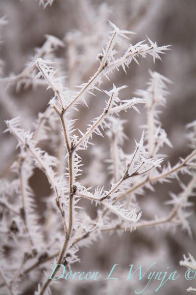 Winter frost_9316.jpg