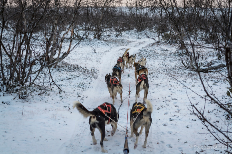 Dog Mushing-9709.jpg