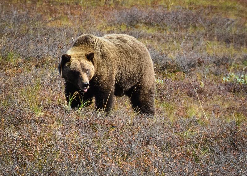 Denali-National-Park-142.jpg