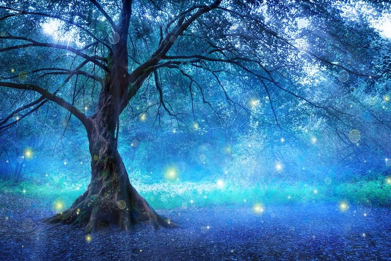 Fairy Tree.jpg
