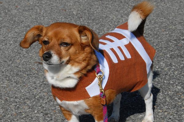 2011-10-16 Morristown Halloween Dog Parade