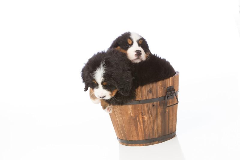 2013-Pearson Pups-Jun02-0409.jpg