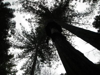 Sonoma Canopy Tour - Nov. 2011