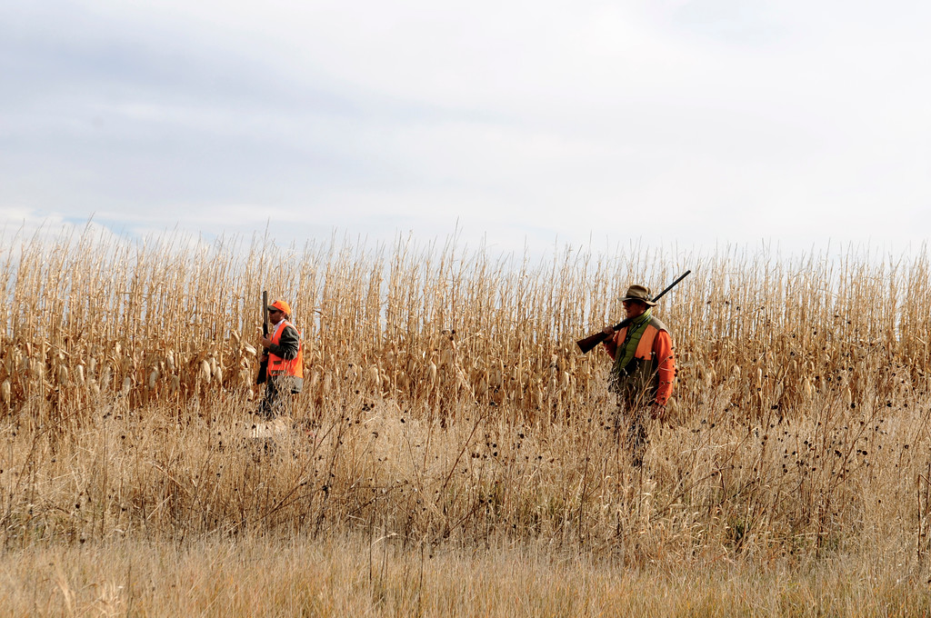 . Jim O\'Neal, left, and Javier Gonzalez-Bringas walk the last few remaining rows of standing corn on O\'Neal\'s family farm in search of pheasants over the 2013 opening weekend. The corn was harvested shortly after the pheasants.