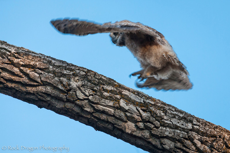 Owl-13.jpg
