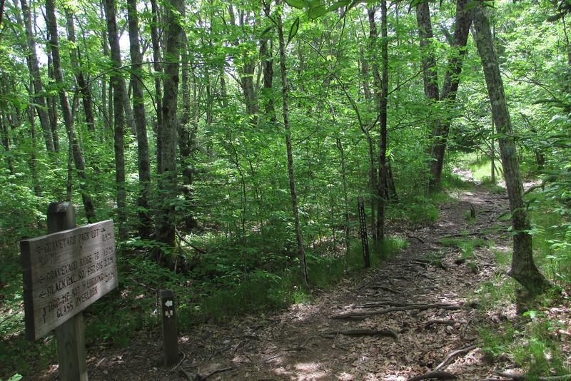 Mountains-to-Sea Trail (5,000')