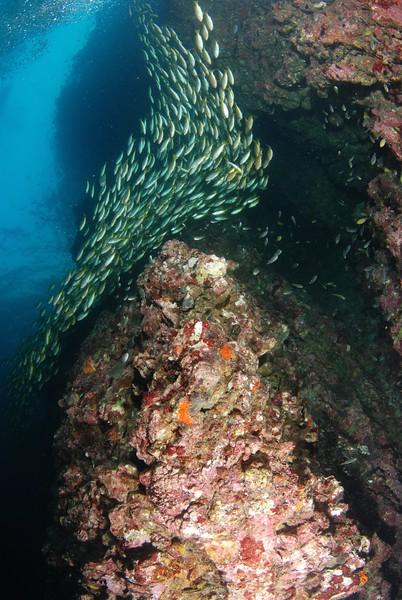 Dive Day Koh Phi Phi