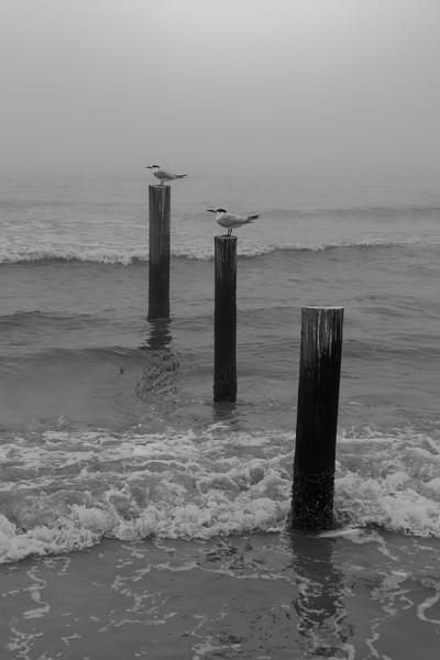 2 Birds 3 Posts