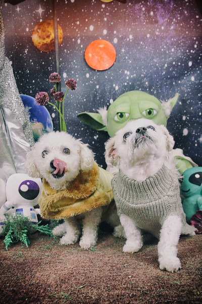 Dogs in Space Feb 22, 2020