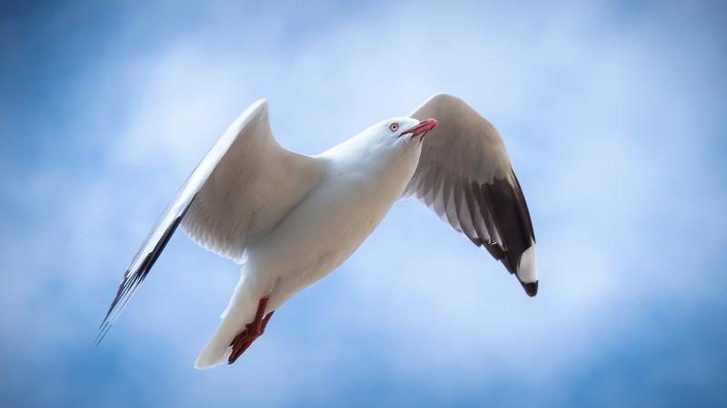 20190227 birds _4.JPG