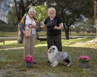 Shetland Sheepdog Club Of Southeast Florida