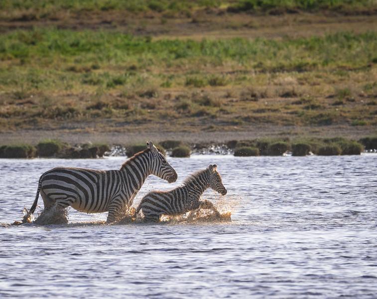 Tanzania_Feb_2018-354.jpg