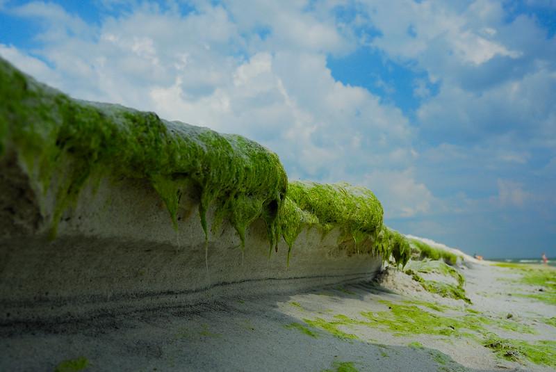 June Grass.jpg