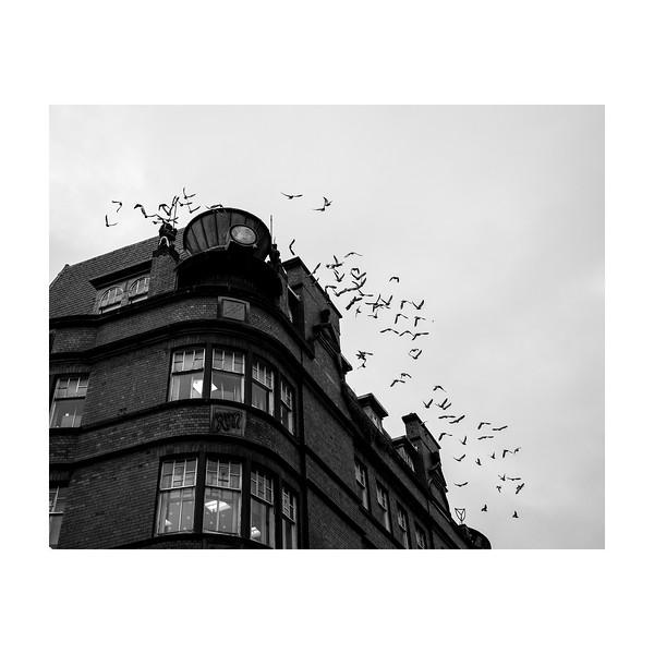 339_Birds_10x10.jpg