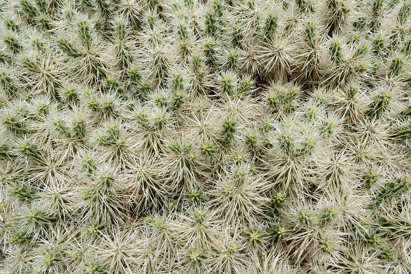 Detailed shot of plants in Cactus Garden, Lanzarote, Spain