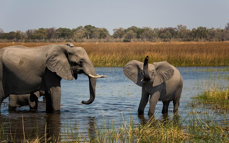 2014-08Aug-Okavango Masters-70-Edit.jpg