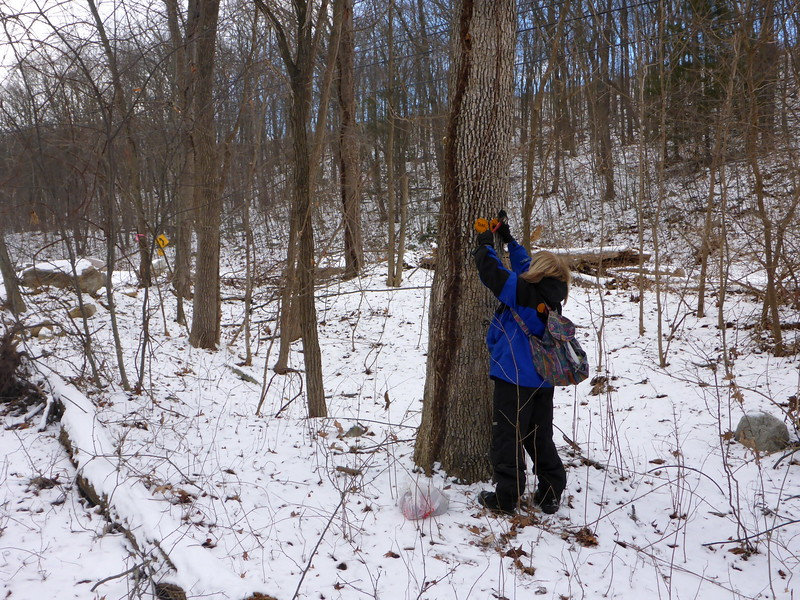 Lois nailing the end blazes of the Minisink trail.