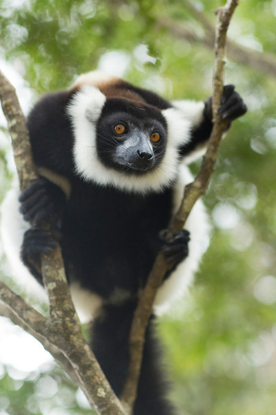 Madagascar_2013_IG3A2322.jpg