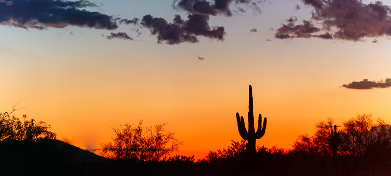 A panorama of a saguaro cactus silhouetted against the glowing red sky of the sunset