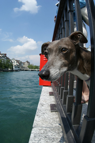 In Zurich looking at ducks.  She loves ducks too.