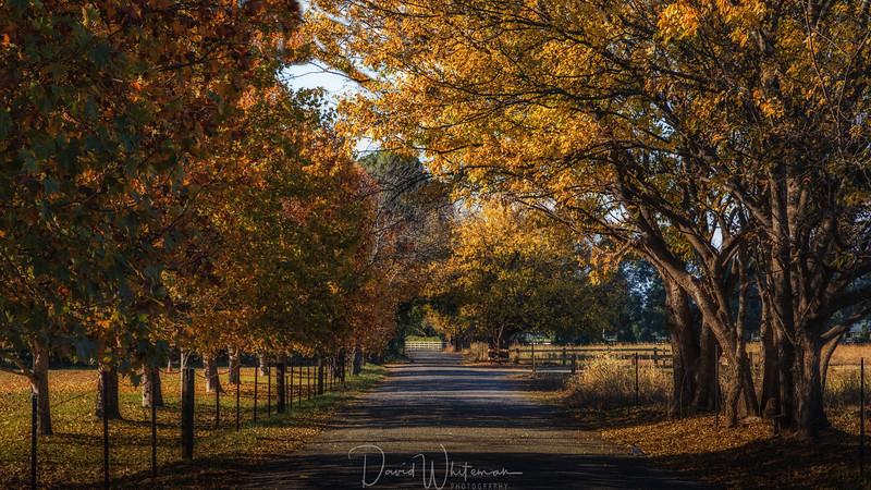 Triangle Lane in Autumn