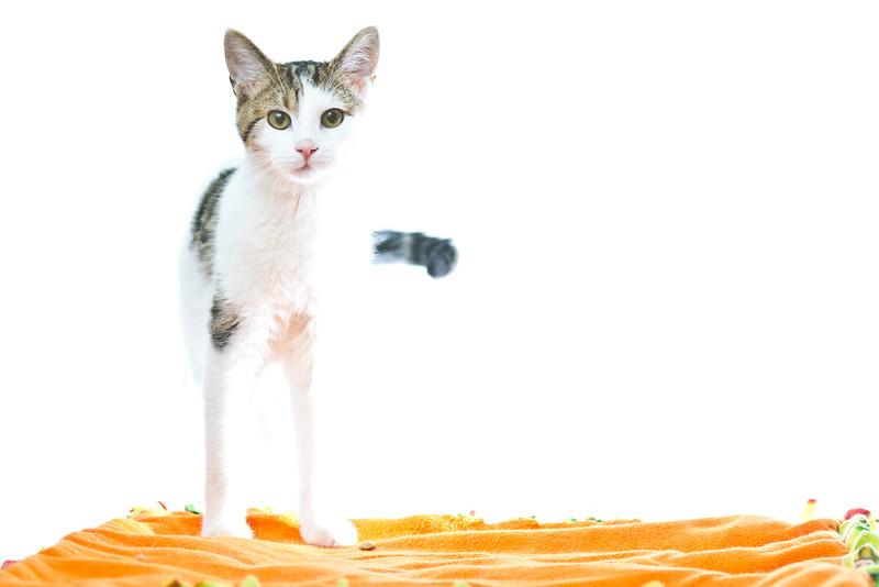 1202_Cats_172.jpg