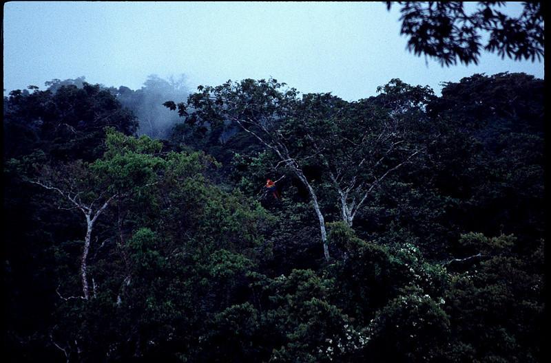 Peru2_039.jpg