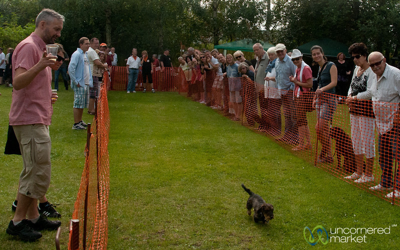 Dachshund Races - Berlin