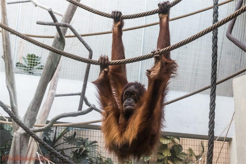 2017-11-16 Zoo Basel - IMG_3217.jpg