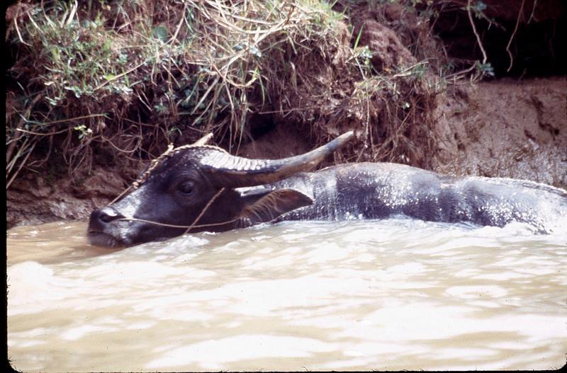 Myanmar1_134.jpg