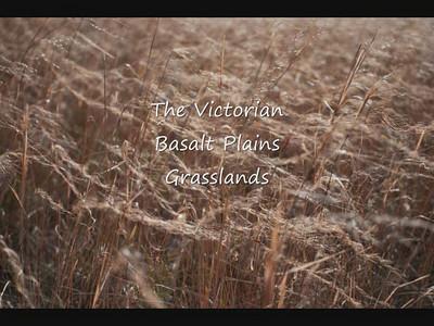Victorian Basalt Plains Grasslands