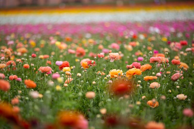 Spring Flowers B-289.jpg