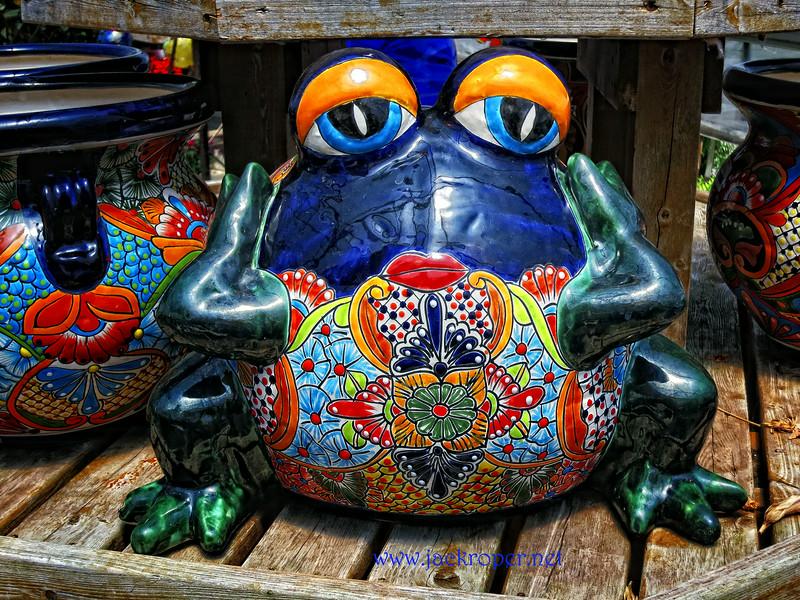 Frog Pondering Life .jpg