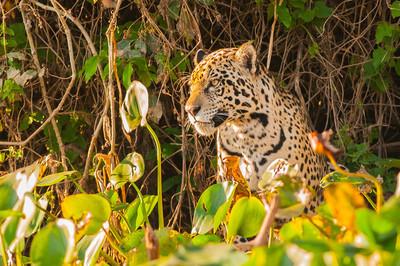 The Pantanal- Brazil