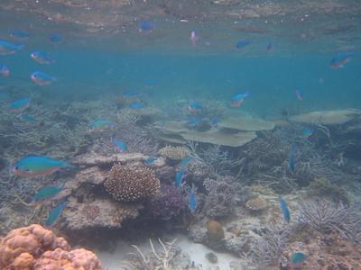Fiji 2011 Underwater
