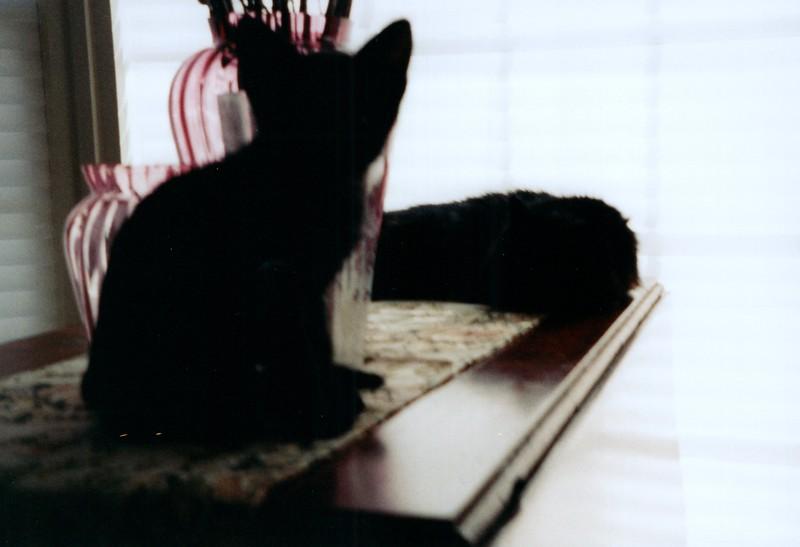 2000_April_Cats_0002_a.jpg