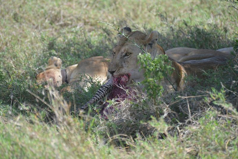 East Africa Safari 320.jpg