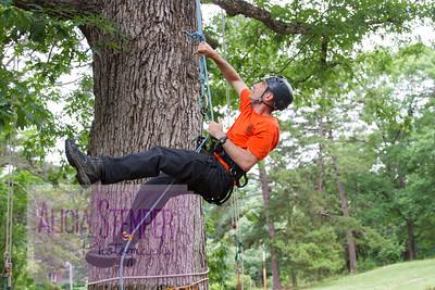 Piedmont Tree Climbing