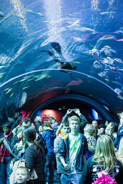 aquarium_0071.jpg
