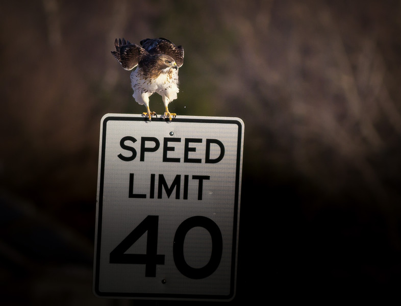 Speed Patrol