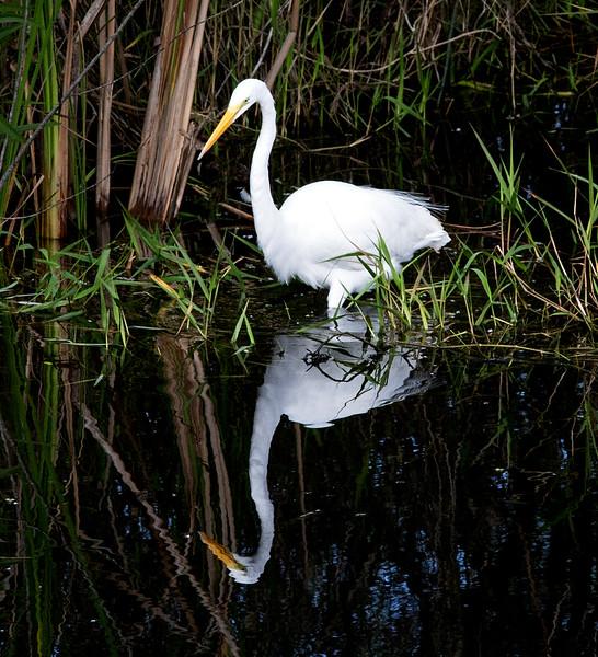 Everglades_063_IMG_0759_Everglades copy.jpg