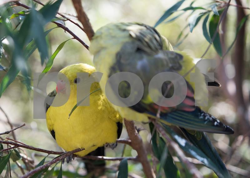 birds 29.jpg