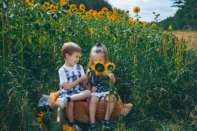 Sunflowers Miller