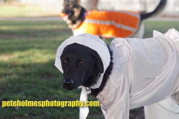 2014 Canine Halloween @ Cadman Park