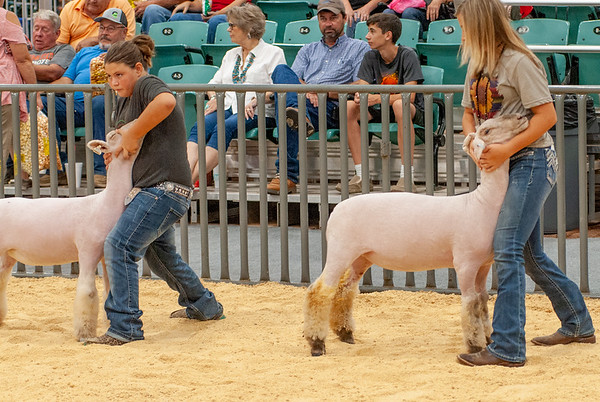 Grady County Sheep Show